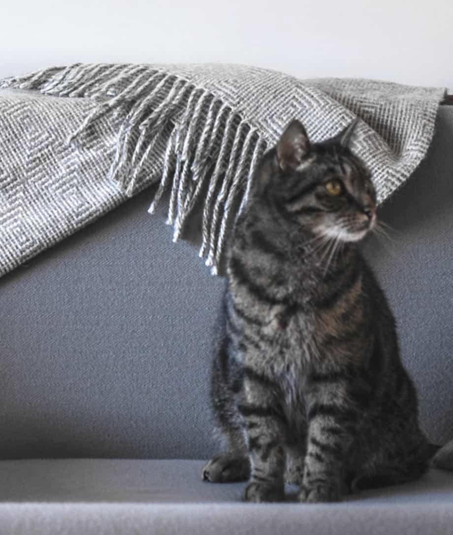 Cat with a cosy blanket