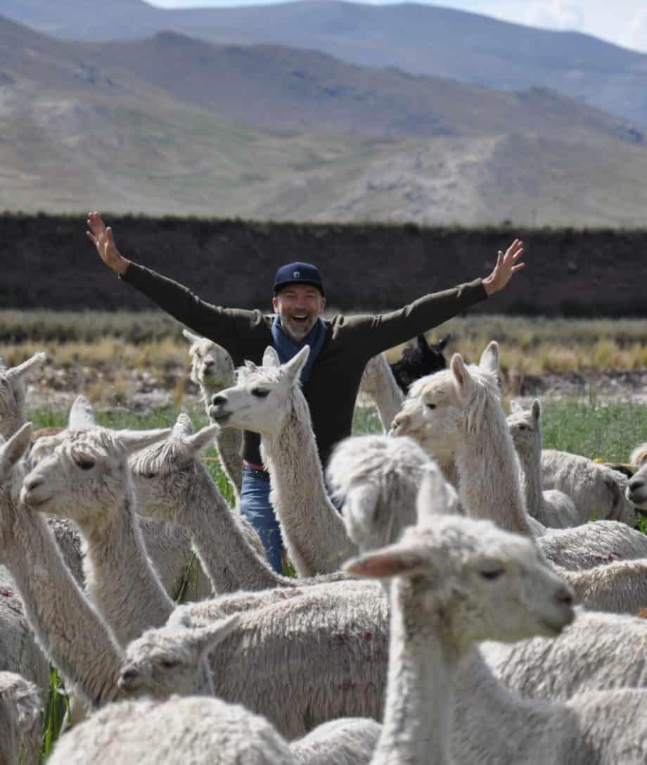 andean alpacas peru