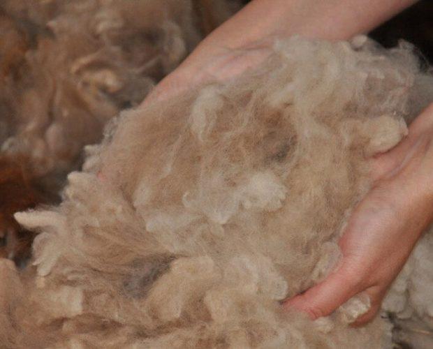 A brief history of alpaca wool