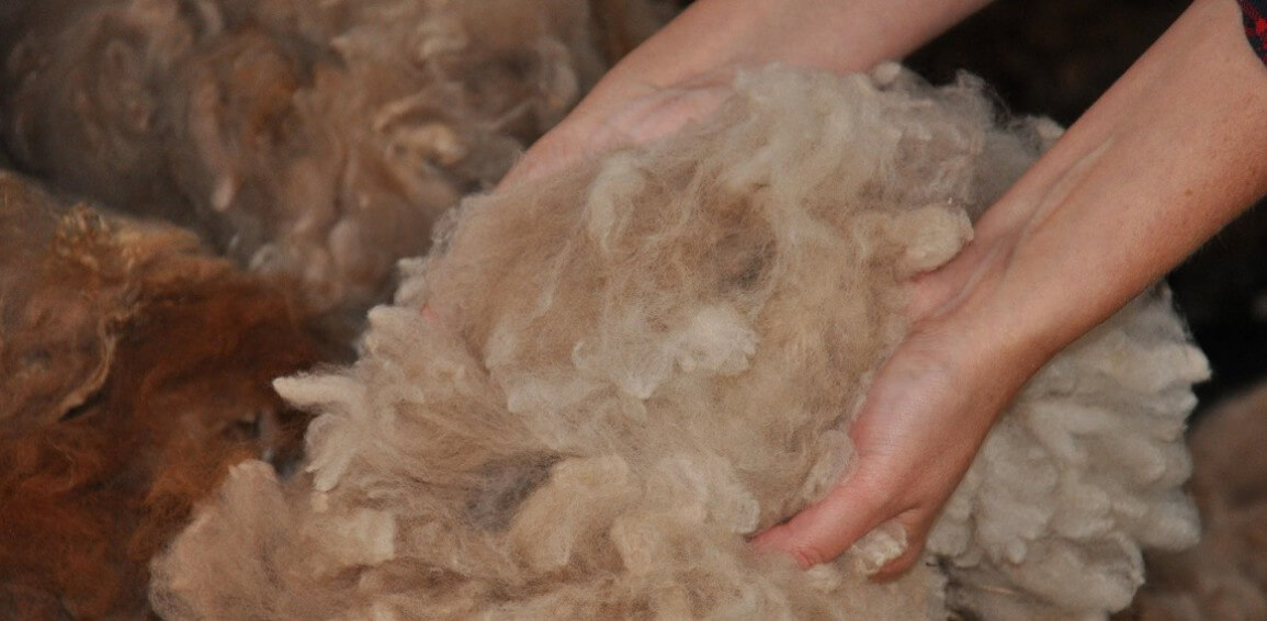 A brief history of alpaca wool