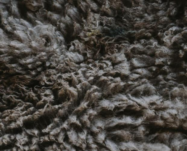 Why wool is saving the world