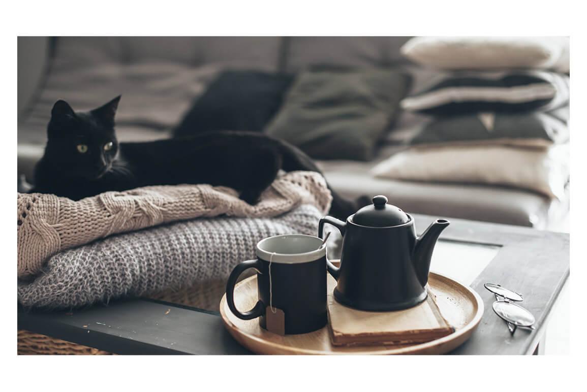 Cat on wool