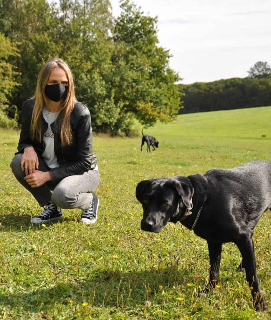 black labrador in the park