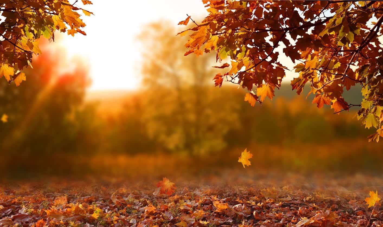 autumn equinox 2021 - photo #1